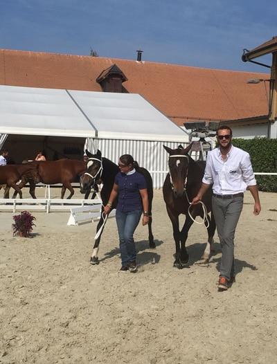 Cours et formations pour les chevaux