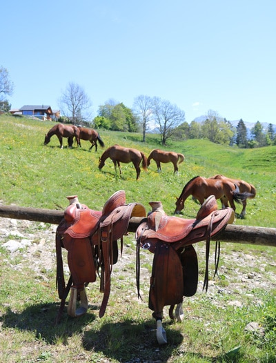 Journées avec des chevaux pour les enfants